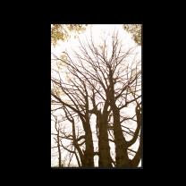 """Sterbebilder & Trauerbildchen """"Bäume"""" mit stimmungsvollem Motiv"""